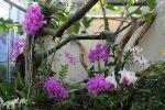 OrchidsGarden